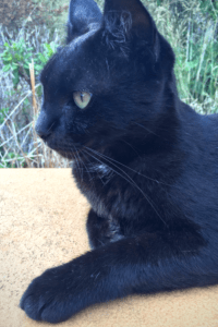 Learn about the Cats of Old Town Dubrovnik