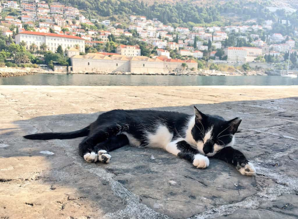 A cat lounging near the walls of Old Town Dubrovnik