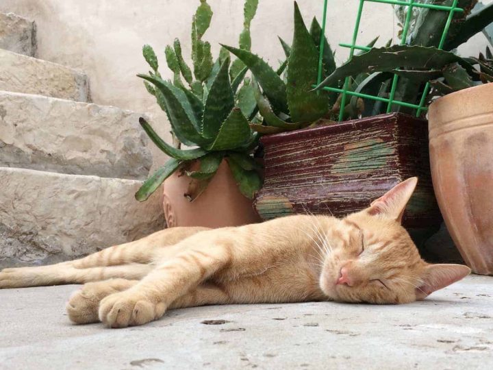 Everything to Know about the Cats of Old Town Dubrovnik