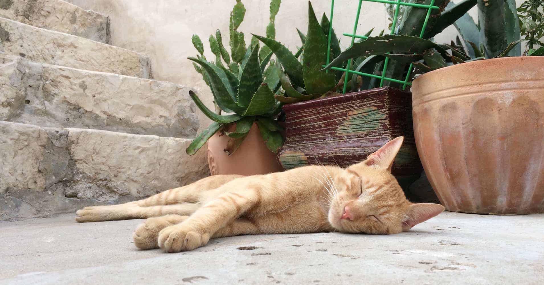 Cats of Dubrovnik - Orange Cat Sleeping