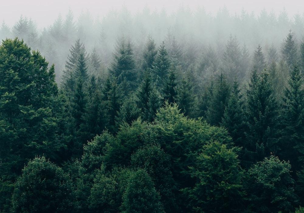 Washington Coast Road Trip - Large Spruce