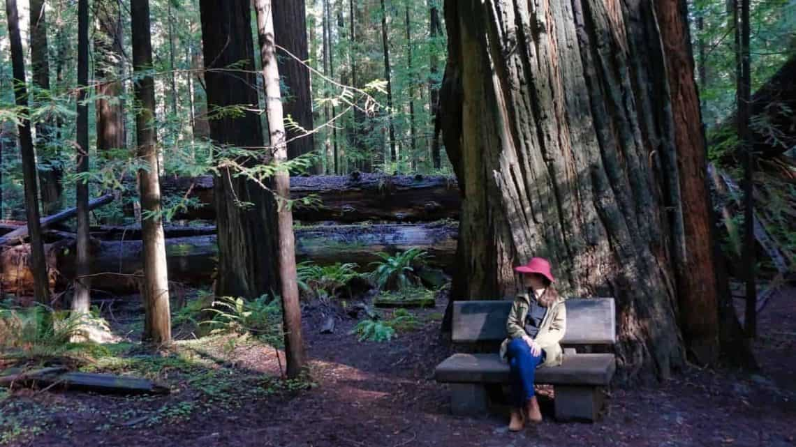 Redwoods near San Francisco - Founders Grove