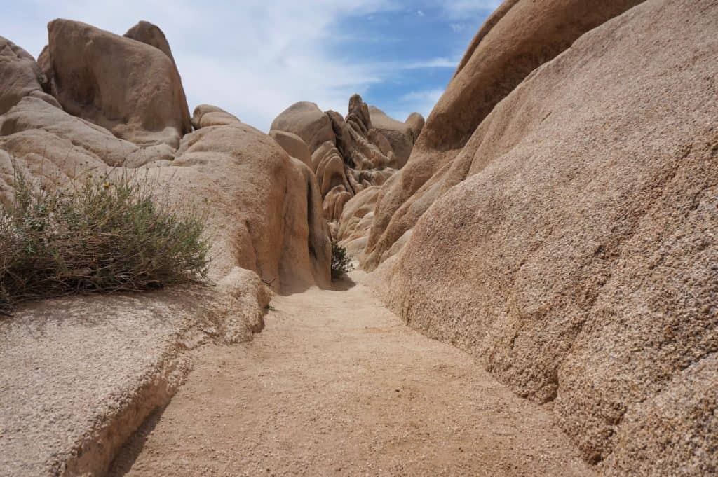 Joshua Tree Weekend Itinerary Hiking Options