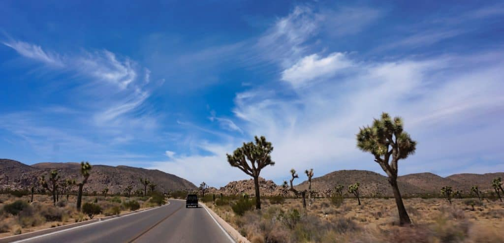 Joshua Tree Weekend Itinerary - Driving past Joshua Trees