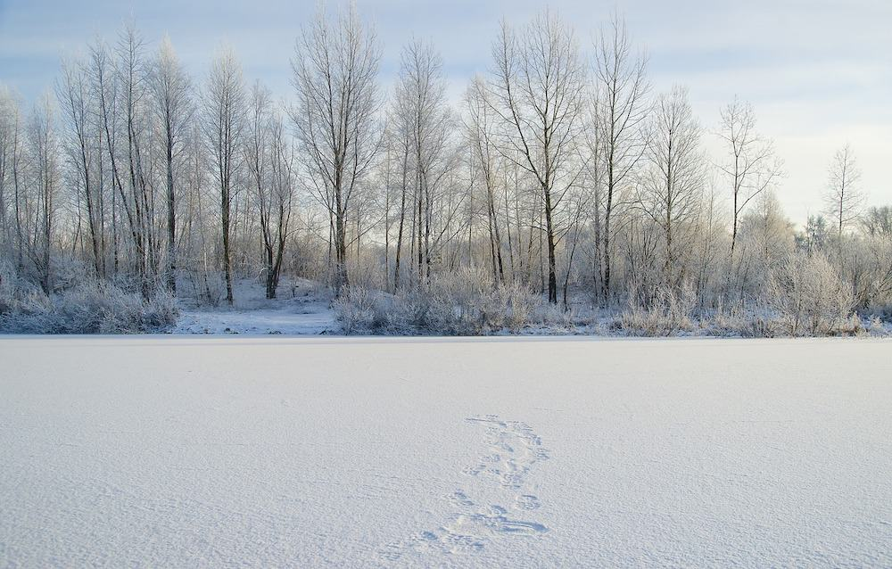 Alaska in Winter - Frozen Lake
