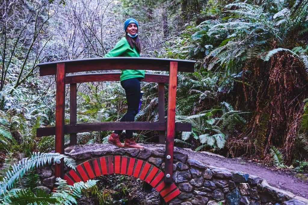 Fort Bragg Trip - Redwood Forest