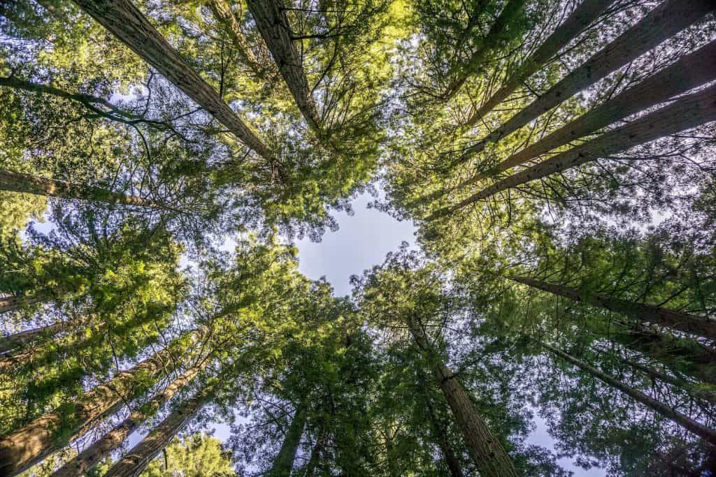 Redwoods Road Trip - Muir Woods