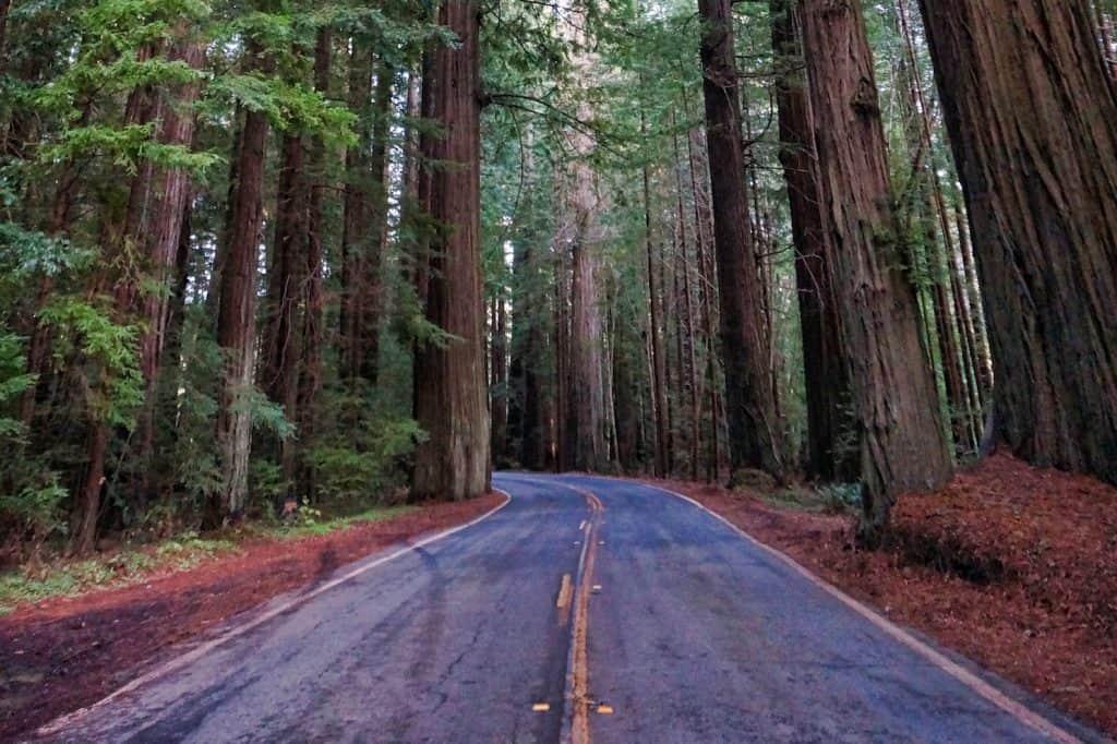 Redwoods Road Trips Hero
