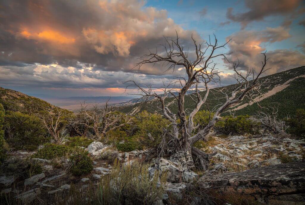 National Parks of Nevada - Great Basin - Andrew Kearns via Flickr