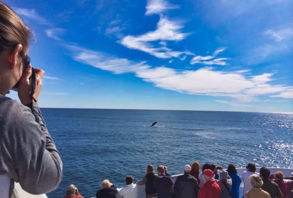 Alaska - Whale Watching in Seward