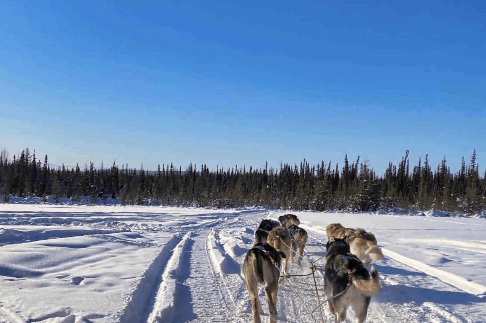 Iditarod Definition Hero