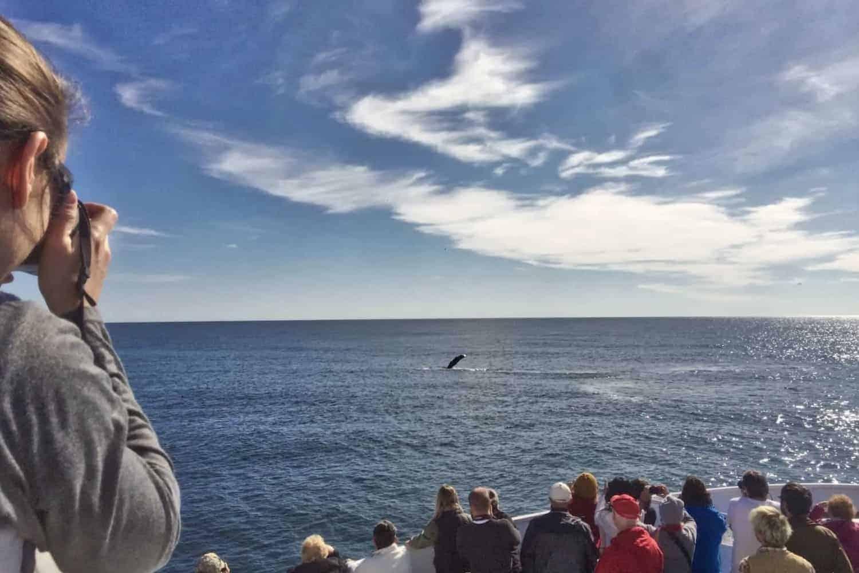 The 16 Best Kenai Fjords National Park Cruise Options Valerie Valise