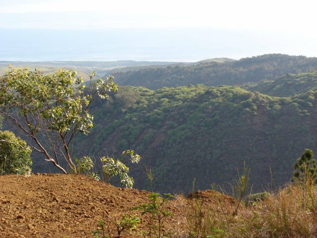 Things to Do in Lanai - Munro Trail - Forest and Kim Starr via Flickr