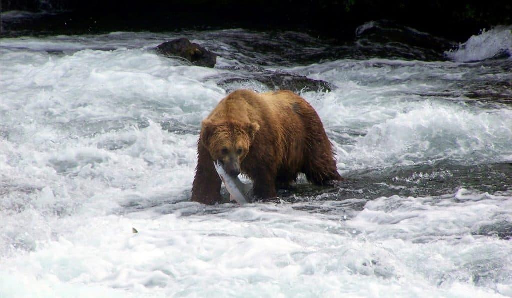 Splurge-Worthy Alaskan Experiences - Grizzly Tour