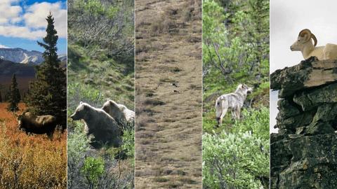 Alaska Big Five Header