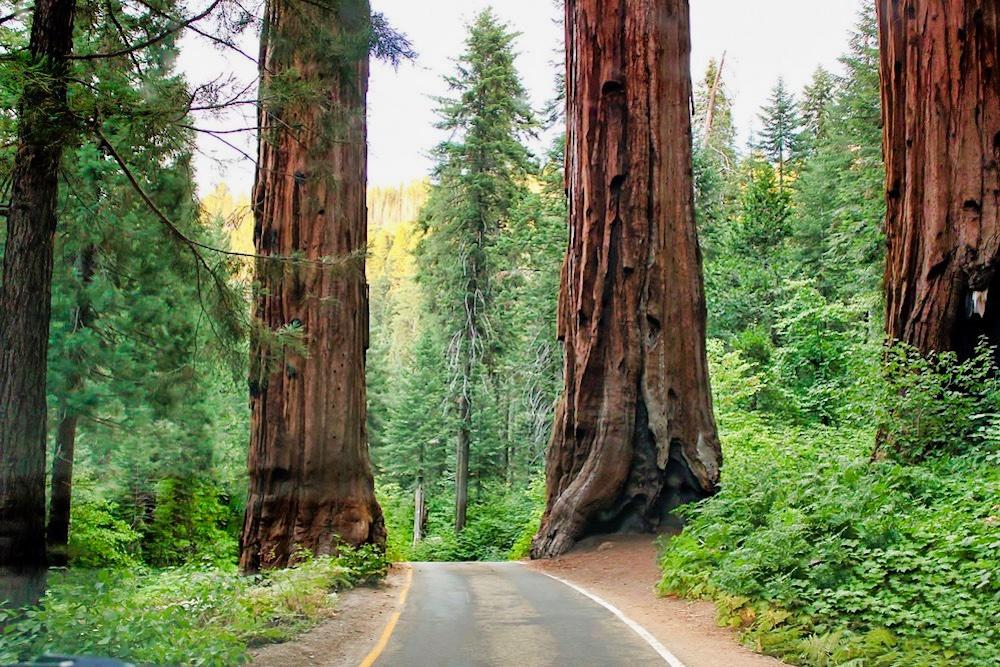 One Day in Sequoia - Generals Highway Between the Sequoias