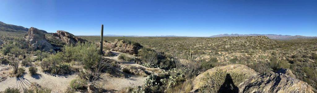 Saguaro National Park Itinerary - Cactus Forest Drive