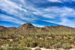 Saguaro National Park Itinerary Hero