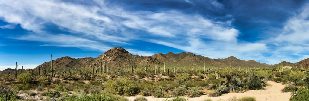 Saguaro National Park Itinerary - Panorama