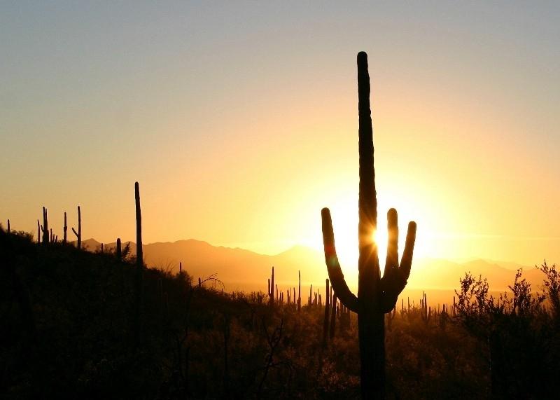 Saguaro National Park Itinerary - Sunset